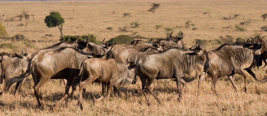 Kenya-8382.jpg